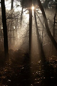 Zonneharpen in het bos. van Miranda Geerts