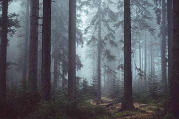 Koniferenwald im Nebel von Origami Art