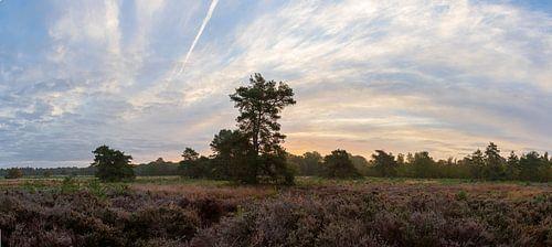 Panorama van een heideveld met een prachtige zonsopkomst op de Veluwe