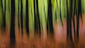 dreaming of woods van Michel Seelen