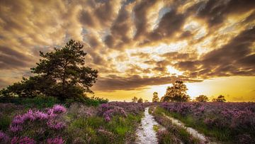 Zonsondergang op de Elspeter Heide van Rob Sprenger