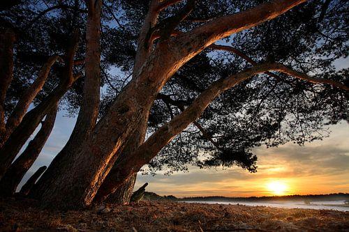 Bomen en duinen van Mark Leeman