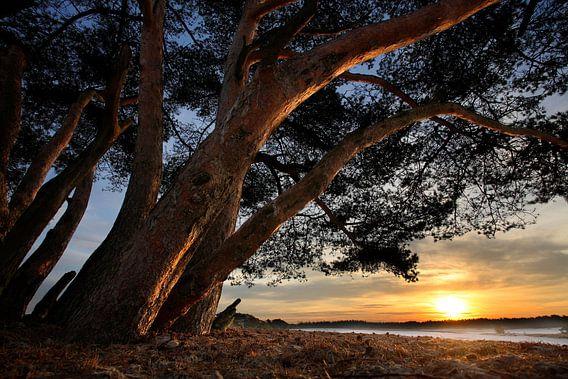 Bomen en duinen