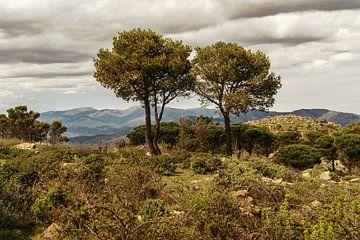 Drie bomen in het landschap van Spanje aan de kust. OP de achtergrond de bergen van de Pyreneeën.  van Ineke Mighorst