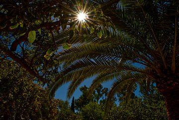Palmblätter und grüne Blätter mit Sonnenstrahlen und blauem Himmel. von Edith van Aken