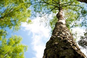 Onderaanzicht van een boom van