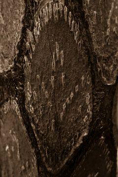 Patroon op stam boomvaren close-up van
