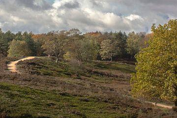 Epe, Nederland, natuurterrein de Renderklippen