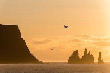 zonsopgang bij Reynisdrangar-kliffen, Vic, zuidkust, IJsland * zonsopgang bij Reynisdrangar-kliffen, van Denis Feiner