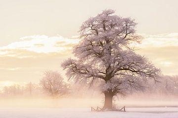 Winter Gloed van