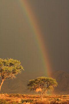 Regenboog met zon en donkere lucht Namibië van Bobsphotography