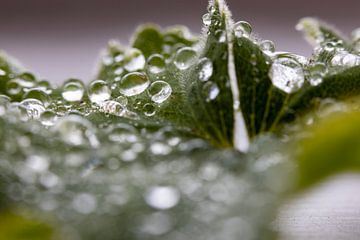 waterdruppels van dauw op het blad gezien door een vergrootglas van Studio de Waay