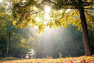 Een zonnige herfstochtend van Maureen Materman