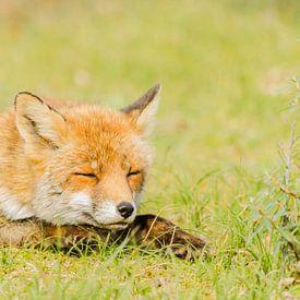 Slapende vos van Ans Bastiaanssen