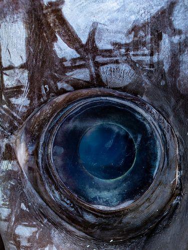 Het oog van