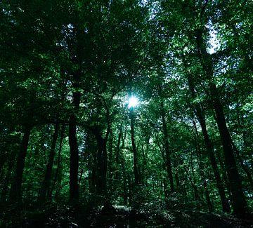 Der grüne Wald von Marjon Boerman