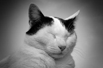 Schwarze und weiße Katze von Joke Absen