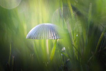 Mystieke ontmoeting met paddenstoel van Arja Schrijver Fotografie