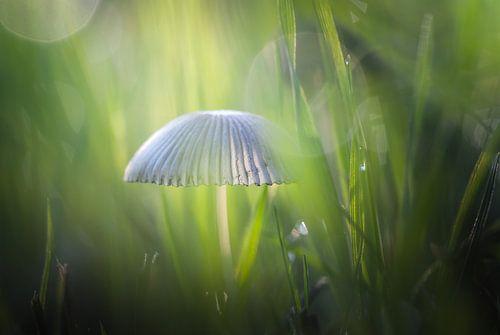 Mystieke ontmoeting met paddenstoel