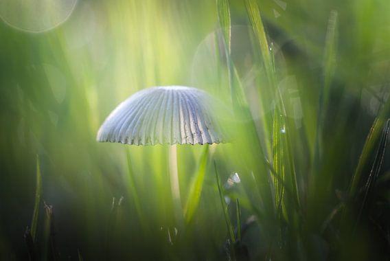Mystieke ontmoeting van Arja Schrijver Fotografie