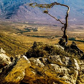 Socotra - Analoge Fotografie! von Tom River Art
