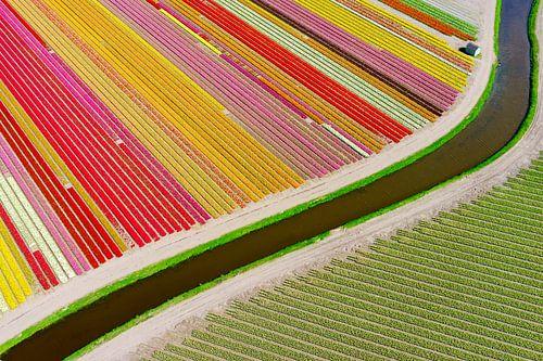 holländsk abstraktion i färg. van