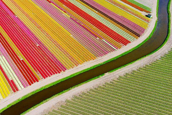 holländsk abstraktion i färg.