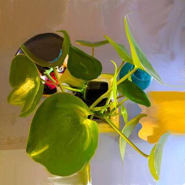 Groene plant paanekoekplant van Raina Versluis