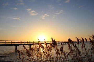 Morgens am Bodden von Ostsee Bilder