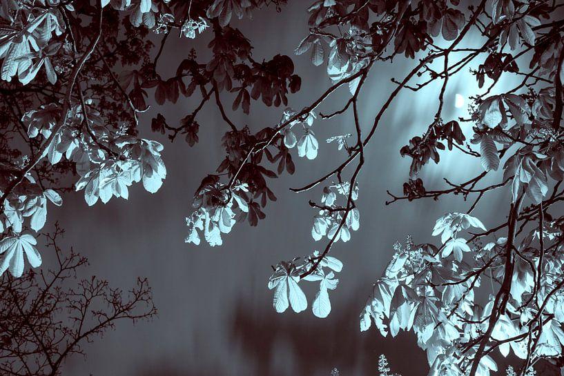 Kastanjeboom bij maanlicht van Raoul Suermondt