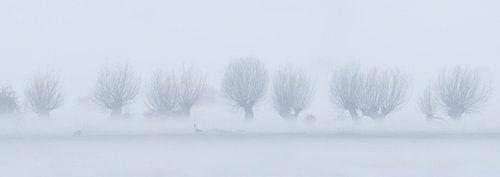 Vreugderijkerwaard in de mist