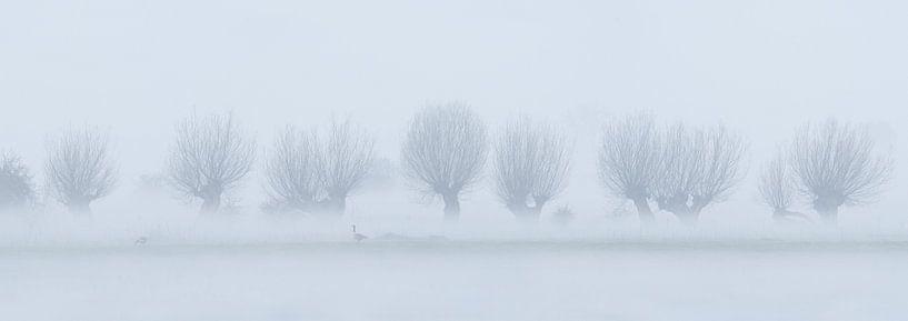 Vreugderijkerwaard in de mist van Erik Veldkamp