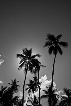 Palm von Aldo Westmaas