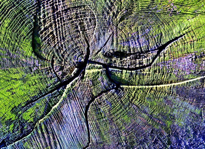 Patroon in een boom van Sigrid Klop