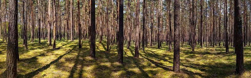Panorama de la forêt sur Frank Herrmann