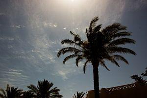 Palmboom in de zon van