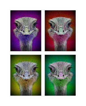 POP ART Nandu - by Jean-Louis Glineur von Jean-Louis Glineur alias DeVerviers