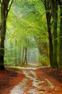 een kronkelend bospad
