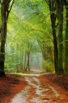 een kronkelend bospad van Rigo Meens