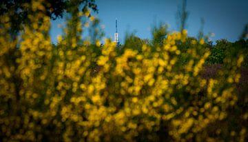 TV toren van Onno van Kuik