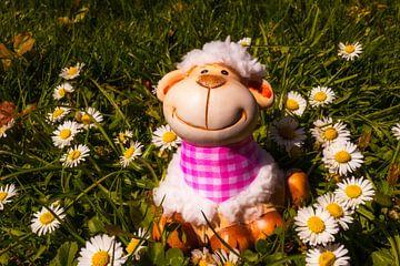 kleines Schaf von Dagmar Marina