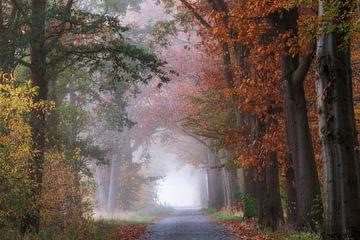 Nebel an einem schönen Herbstmorgen von Francis Dost
