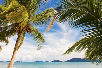 Wogende Palmen auf einer tropischen Insel von Melissa Peltenburg