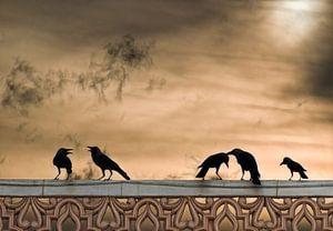 Vogels bij zonsondergang