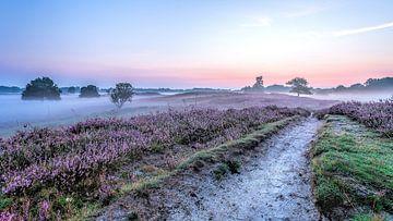 Pad  in de Gasterse Duinen paarse heide en mist van