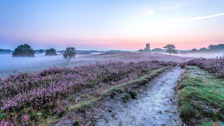 Pad  in de Gasterse Duinen paarse heide en mist