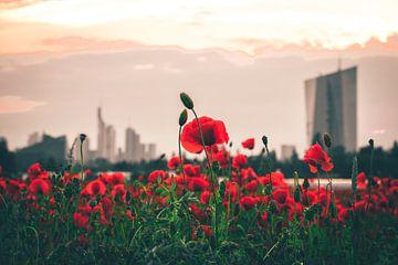 Klaprozenveld voor Frankfurt en de skyline van Fotos by Jan Wehnert