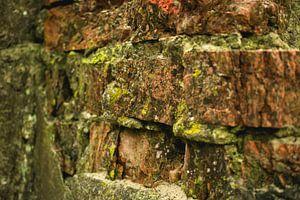 Mur robuste avec mousse sur Eugenlens
