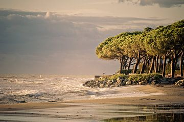 Strand in Corsica van Jonathan Schöps | UNDARSTELLBAR