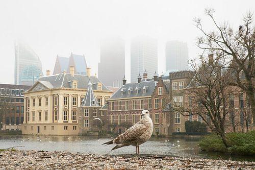 Meeuw bij de Hofvijver in Den Haag van Cor de Hamer